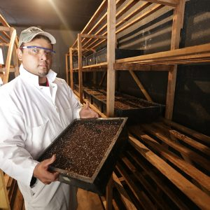 Associates Insectary  raises beneficial insects which are released into orchards.