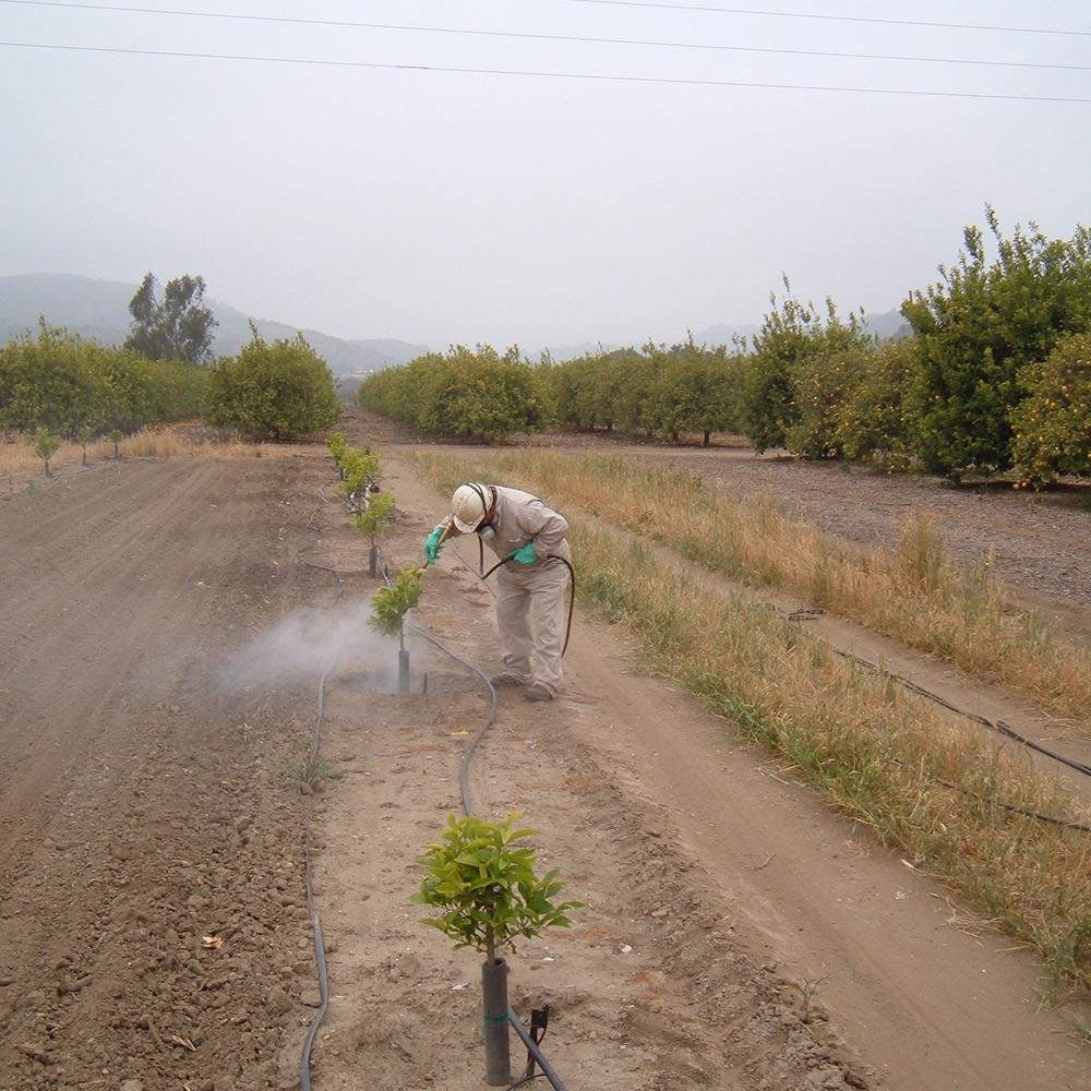 Pest Control Spray Application