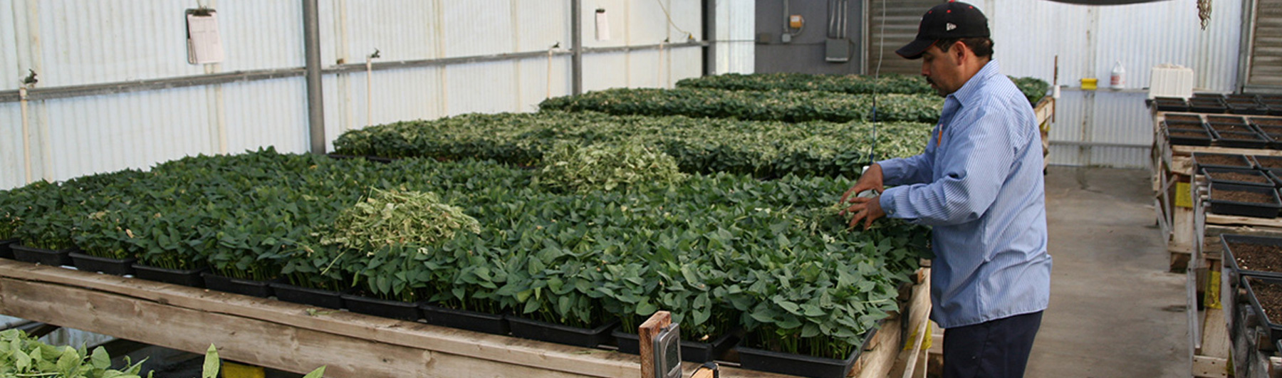 California grown and raised beneficial insects  ready for quick shipping and maximum predator count.